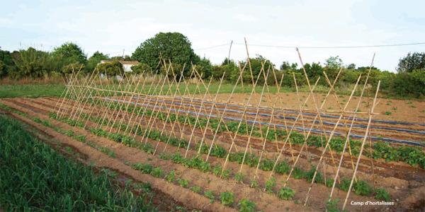 Camp d'hortalisses. Paisatges de la Safor