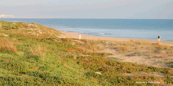 Dunes de la plaja d'Oliva. Paisatges de la Safor